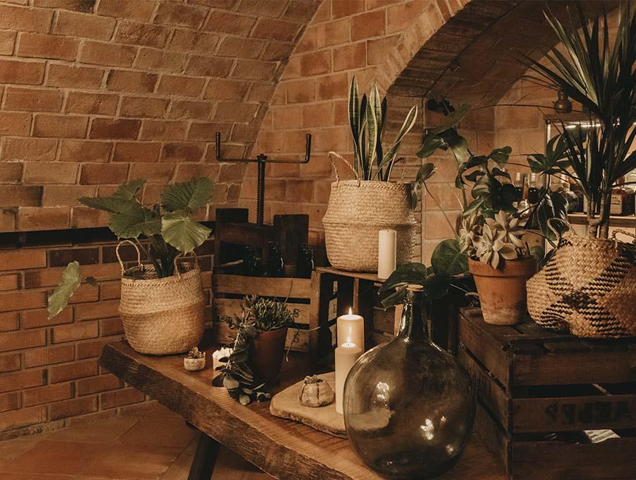 rincón de plantas en la masia can colomer